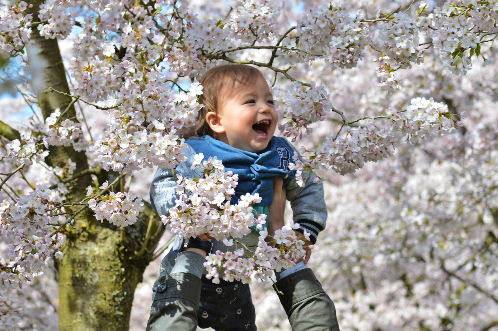 Happy child among the cherry trees in Amstelveen.