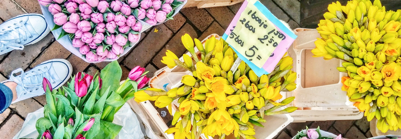 Spending Spring in The Netherlands