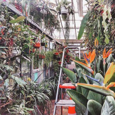 Botanical Garden Zuidas Amsterdam