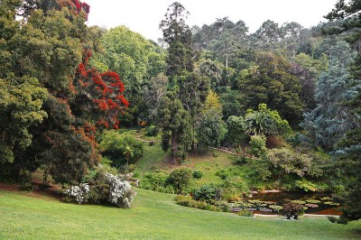 Japanese Garden at Monserrate Palace.