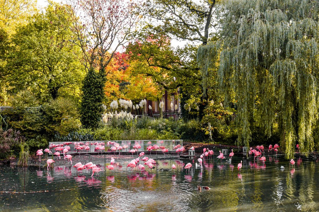 Flamingos at Artisplein in the Plantage neighbourhood