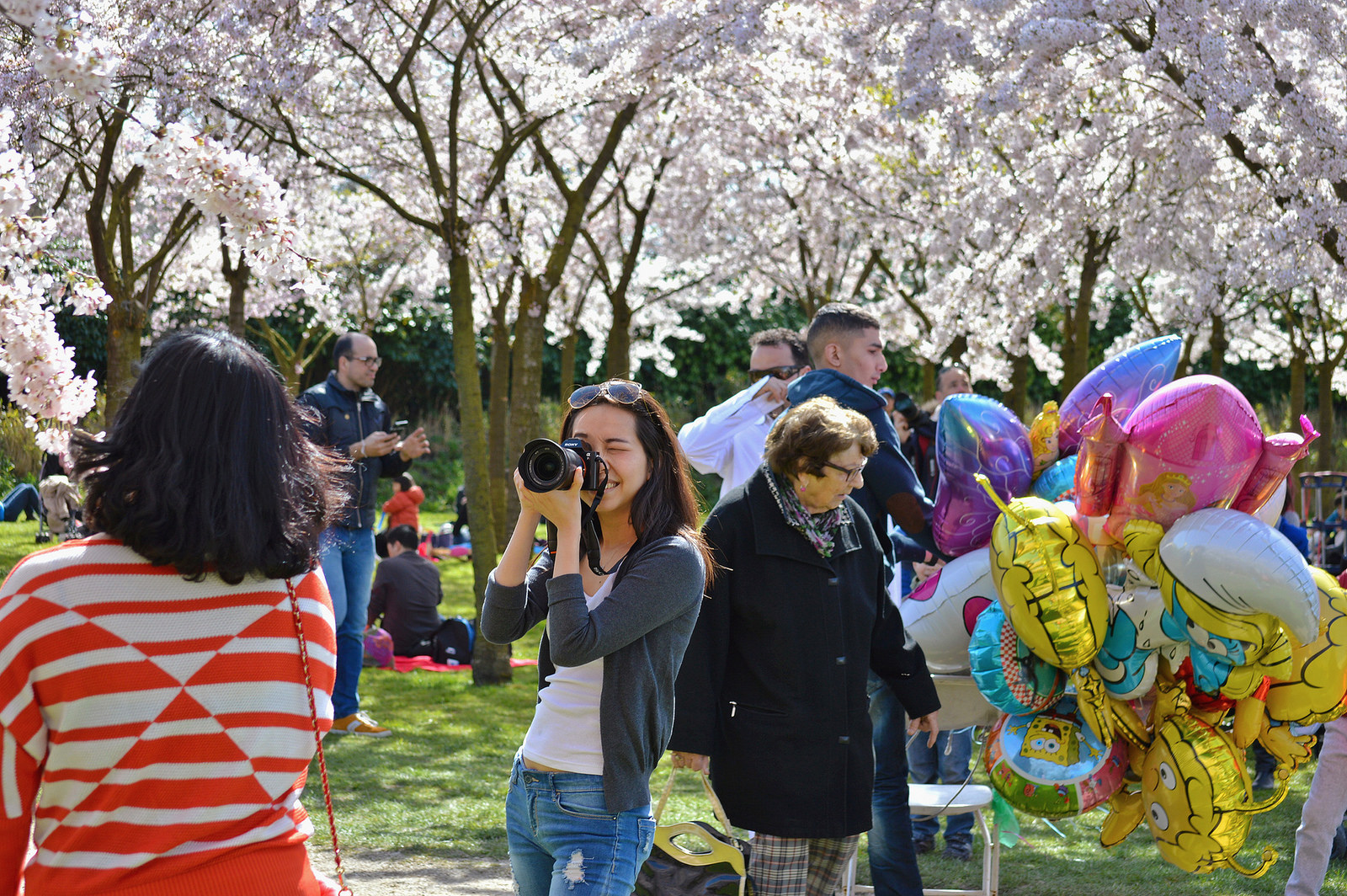 Taking photos with the cherry blossoms in Amstelveen.