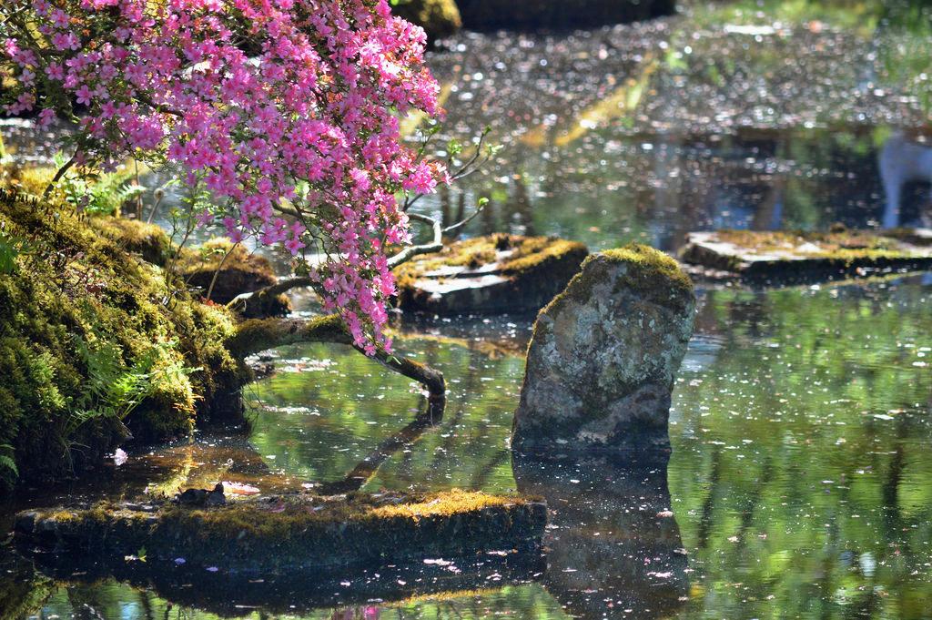 Japanese Garden in The Hague.