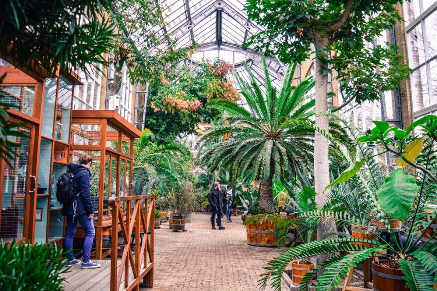 Hortus Botanicus in Amsterdam